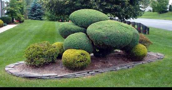 Best way to cut a privet Hedge, Softened-Shrub-Sections-hedge,