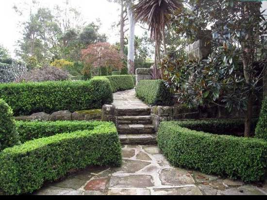 Best way to cut a privet Hedge, Solid-Hedge-Border,