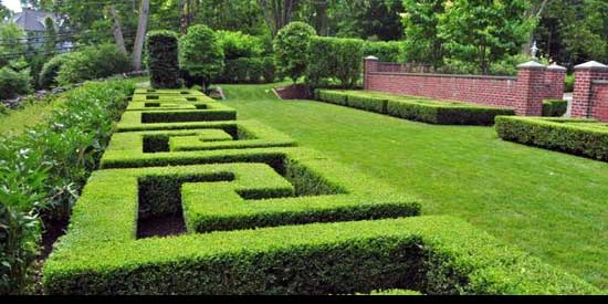 Best way to cut a privet Hedge, maze-shape-hedge-decorating,