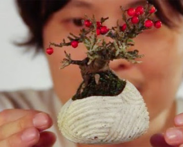 bonsai tree,